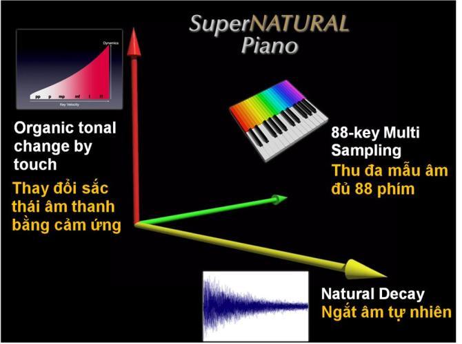 Piano điện Roland RP501 SuperNATURAL sound