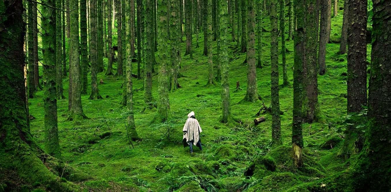 sheet một đời người một rừng cây